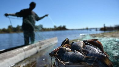 Photo of IFAD, Mozambique Sign USD 49 million aquaculture agreement