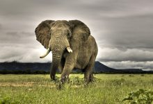 Wildlife Picture from The Southern African Times Library