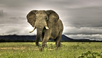 Photo of Virtual safaris keep wildlife in sight for absent tourists