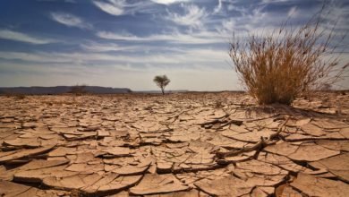 Photo of Africa's energy sector has most opportunities for investing in climate change: Survey