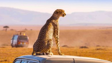 Photo of South Africa's tourism industry is on indefinite hold – even though some hotels are hosting clandestine stays