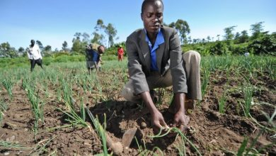 Photo of Climate change: Building smallholder resilience in sub-Saharan Africa