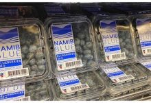 Photo of Namibian blueberries a hit on the global market