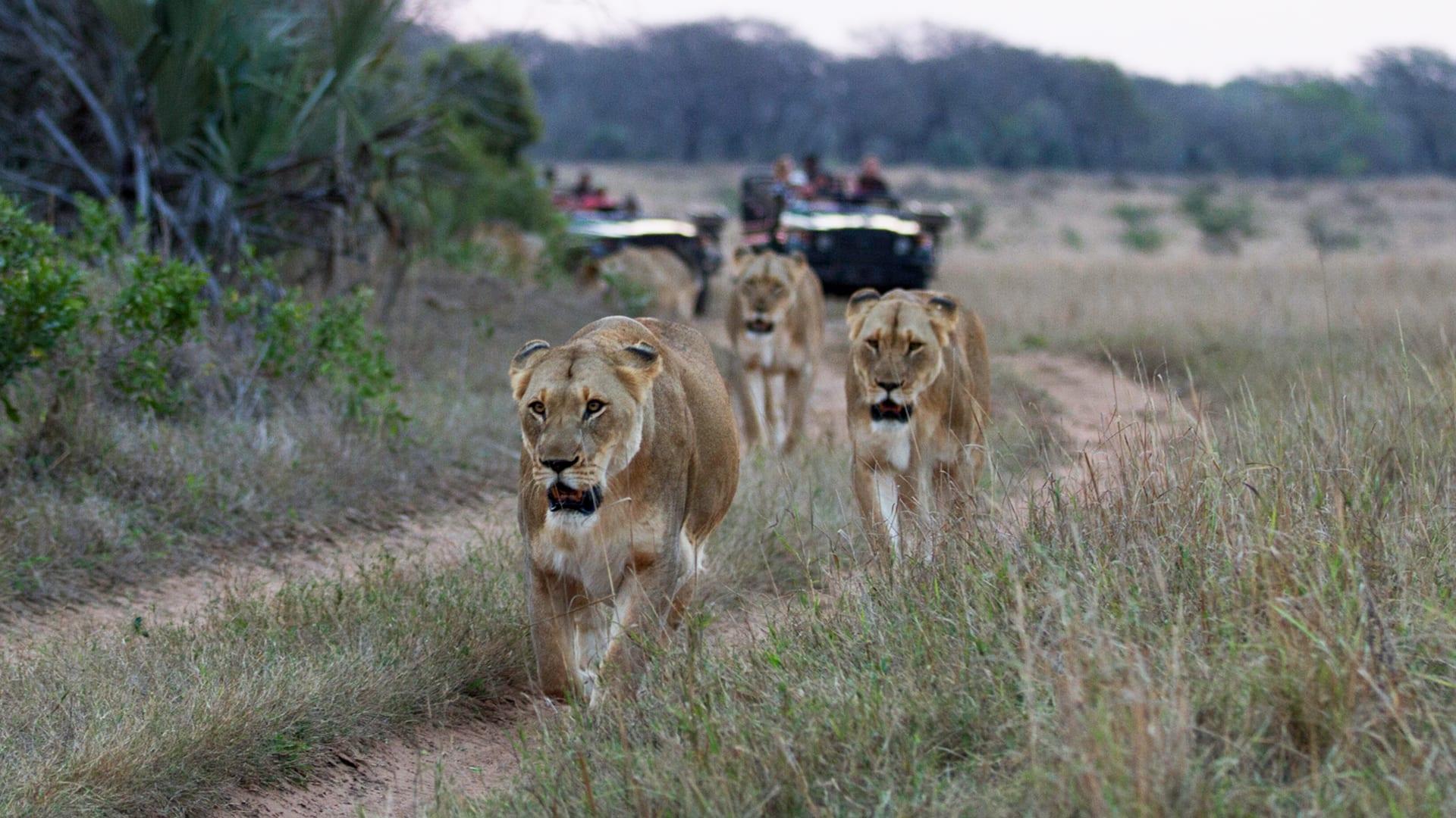 Photo of Uganda launches virtual Safari to kick-start tourism sector