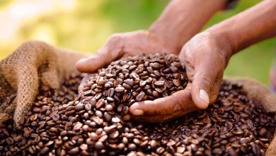 Photo of Uganda's coffee export earnings up 4.6 pct in October