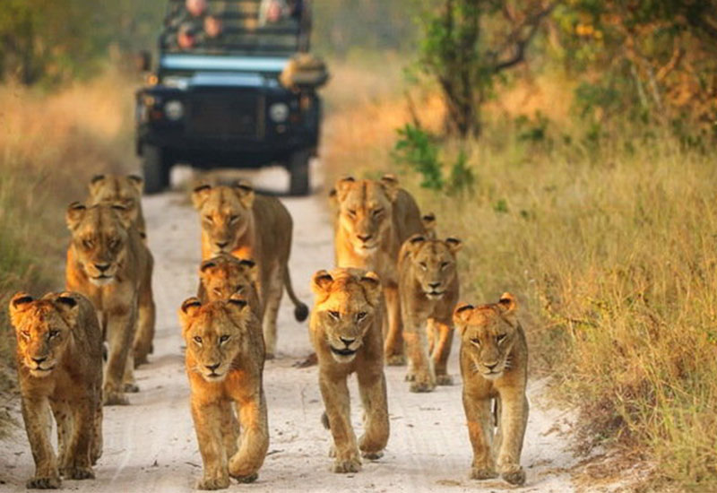 Photo of Wanted: Companies who can build and run spas in the Kruger Park