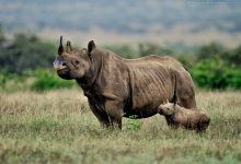 Photo of Namibia sees steady downward trend in rhino and elephant poaching