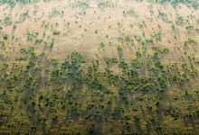 Photo of Newly seeded with $16 billion, Africa's Great Green Wall to see quicker growth